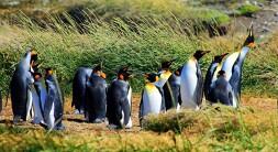 Tierra del Fuego Dia Completo: Pinguim-rei