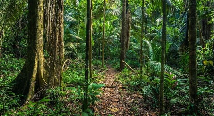 Bosque en Parque Nacional Manu 4 dias