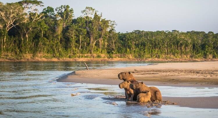 Animales en Parque Nacional Manu