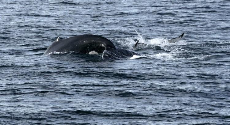 Baleias na Patagônia