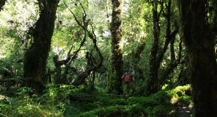 Floresta patagônica