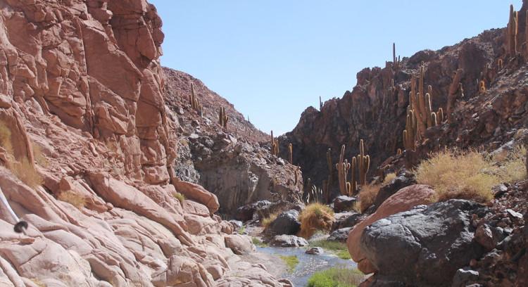 Laderas del valle de los Cactus