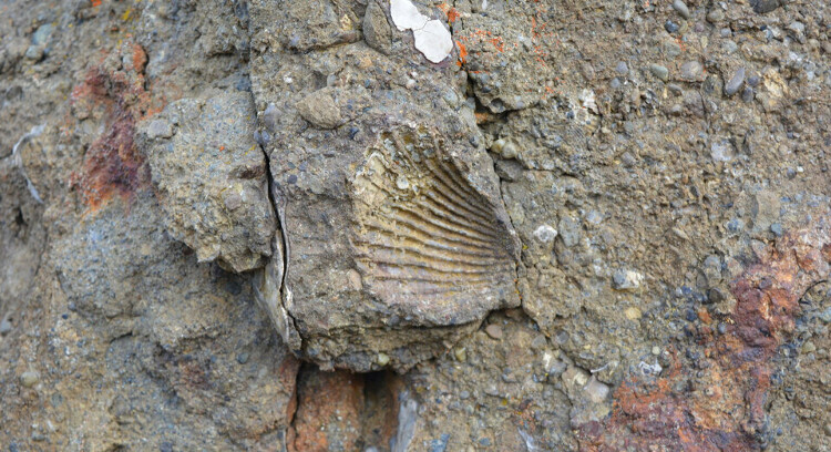 Fósseis marinhos em Patagônia